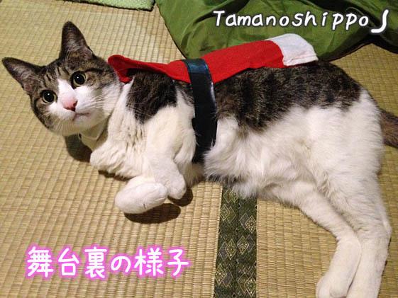 サンタさんのコスプレ?猫(ちび)