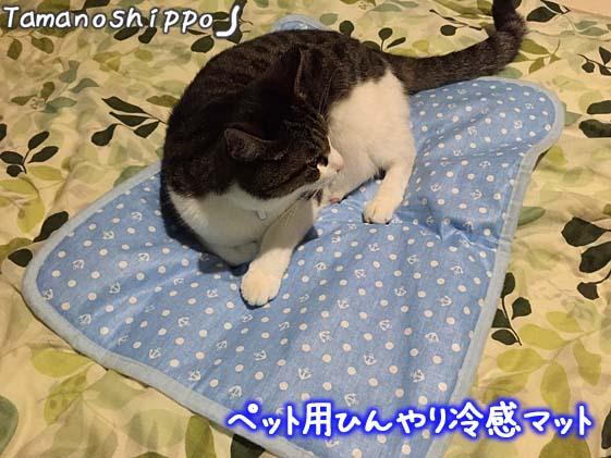 ペット用冷感マットの上で寝る猫(ちび)