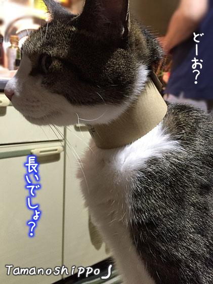 首長族 風の猫(ちび)ファミマのコーヒーホルダー