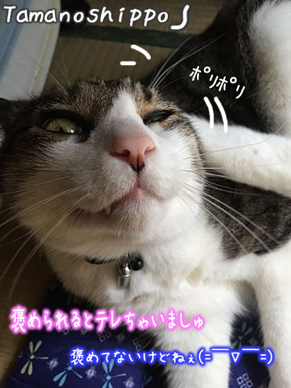 照れる猫(ちび)後ろ足でカイカイする猫変顔