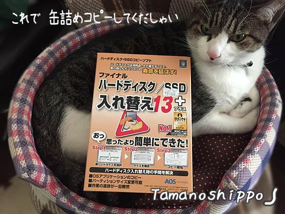 缶詰めコピー機(ちび)PCソフトと猫
