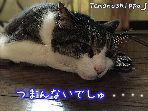 つまんなそうな猫(ちび)退屈そうな猫
