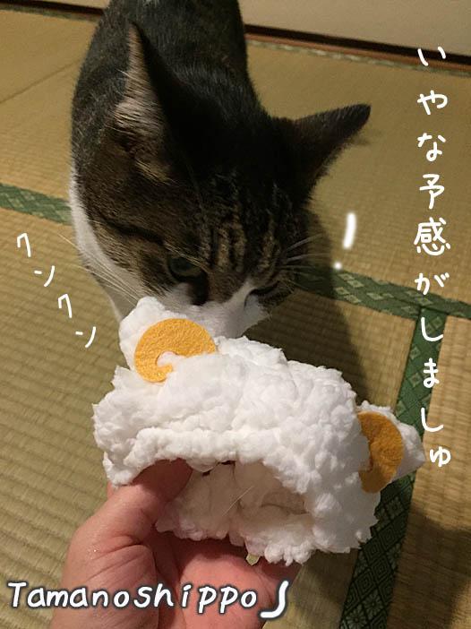 ひつじのかぶりものをクンクン確認する猫(ちび)