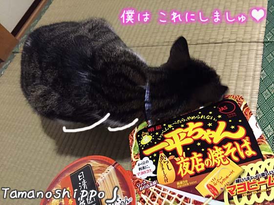 カップらー麺にすり寄る猫(ちび)