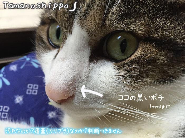ちびの鼻にできた黒いブツブツ瘡蓋(カサブタ)