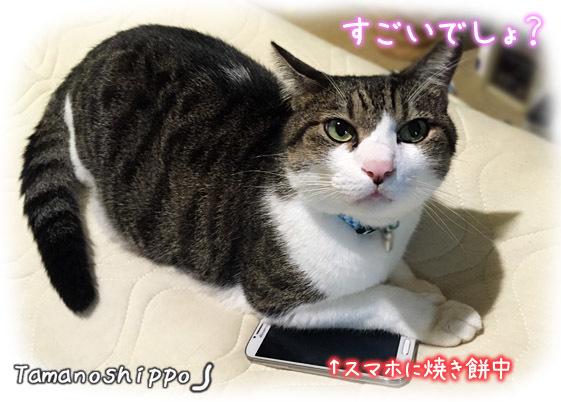 ドヤ顔の猫(ちび)