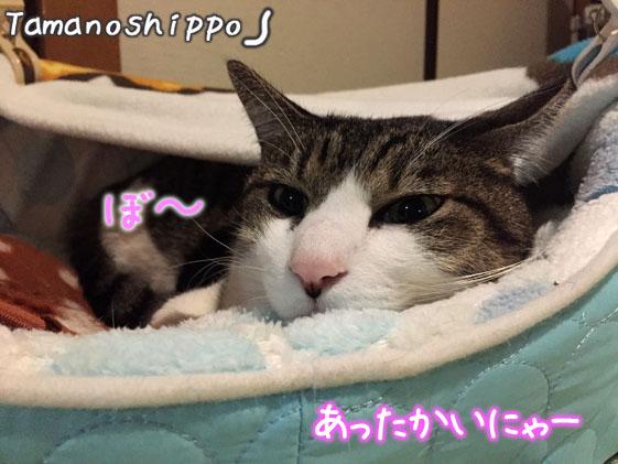 湯たんぽの温かさでボーとしてる猫