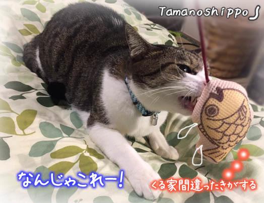 「たい焼き」さんと遊ぶ猫(デンタルおもちゃ)