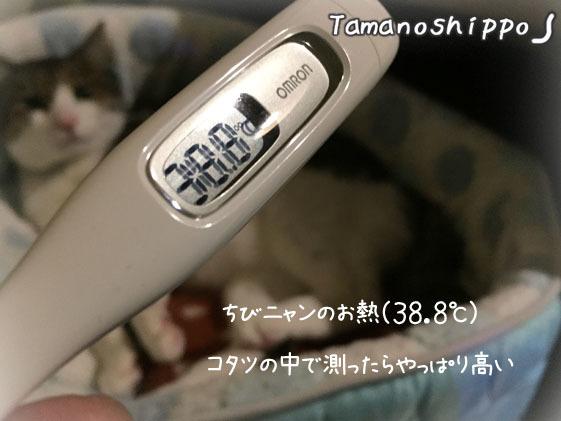 人間の体温計で測った図(ちび)平熱