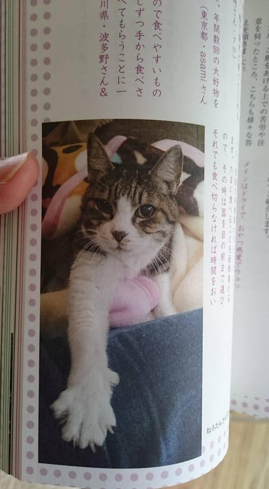 お帰りねろこ ☆ご長寿猫に聞いたことが発売☆