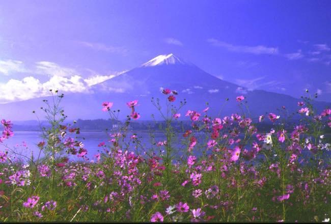 20160915 富士山とコスモス
