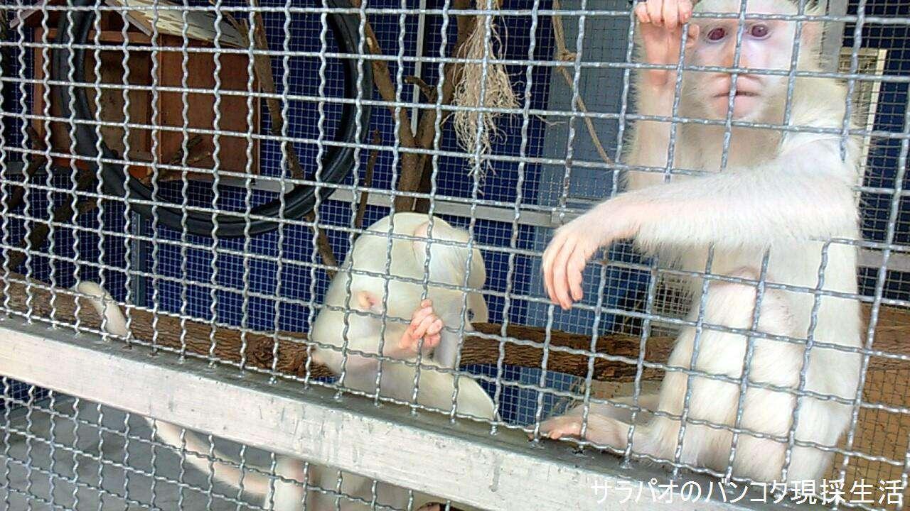 アルビノの動物を集めた大富豪チョクチャイの動物園 in パトゥムターニー県