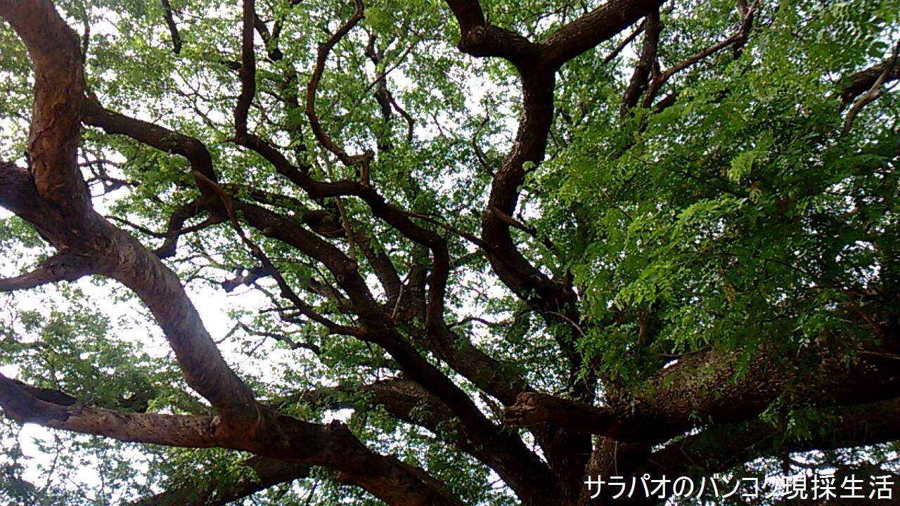 Travel_Kanchanaburi_2_67.jpg