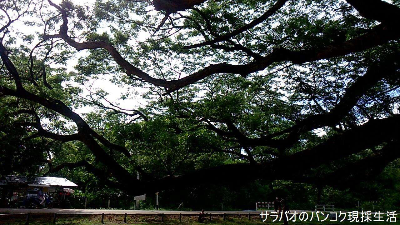 Travel_Kanchanaburi_2_68.jpg
