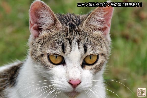 ニャン顔NO40 サバトラ猫さん