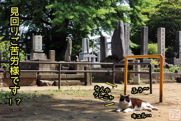 デブ シロクロ猫 お墓