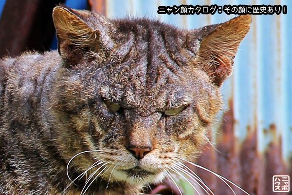 ニャン顔NO43 キジトラ猫さん