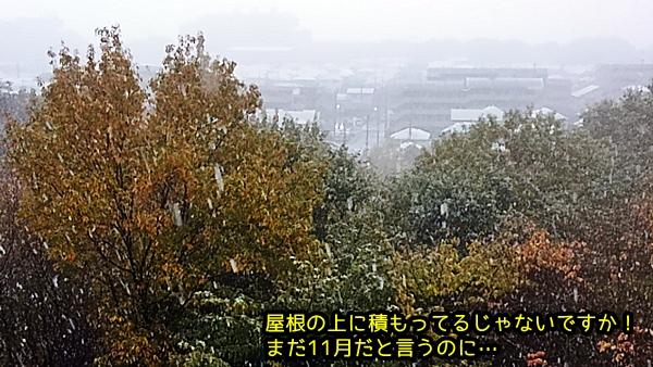 ニャポ基地 初雪