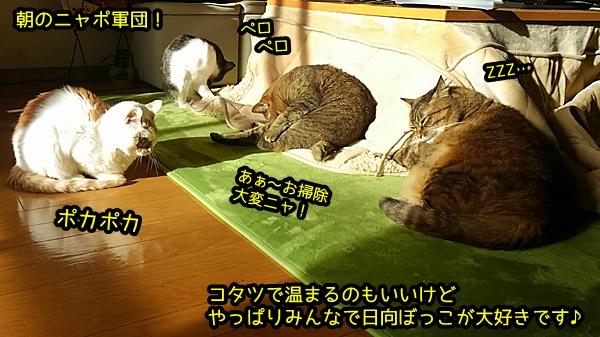 猫 日向ぼっこ ニャポ