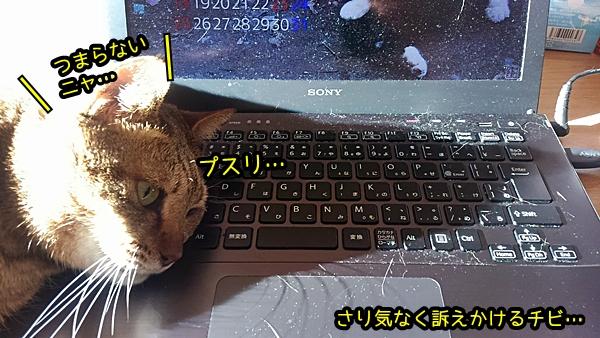 チビ 猫 パソコン