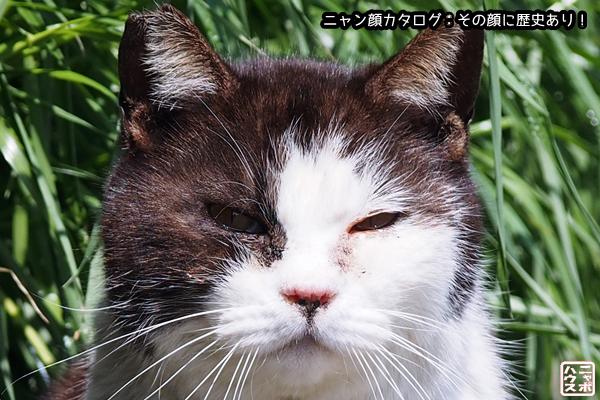 ニャン顔NO42 シロクロ猫さん
