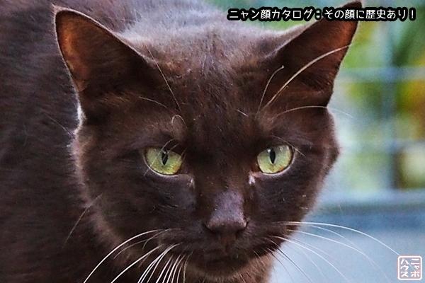 ニャン顔NO41 クロチャ猫さん