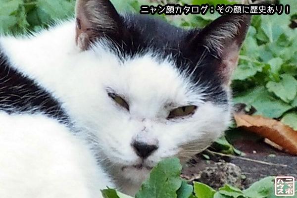 ニャン顔NO54 前髪パッツンなシロクロ猫さん