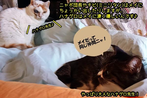 メイ 猫風邪