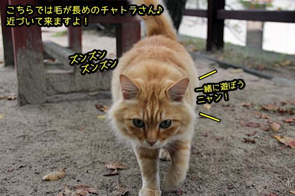 ニャポ旅26 尾道 その5 イタズラ猫さん