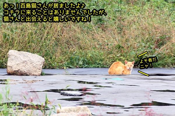 ニャポ旅26 尾道 その7 百島 前編