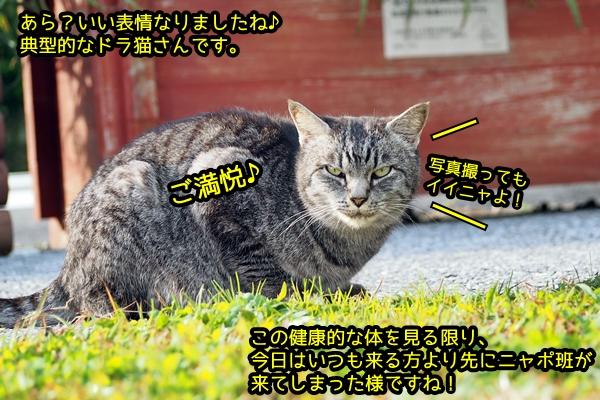 ニャポ旅28 その4 下田の猫さん達