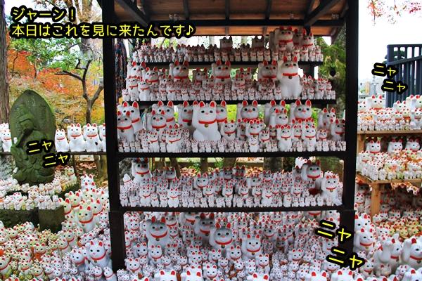 ニャポ旅27 世田谷 豪徳寺 招福児猫