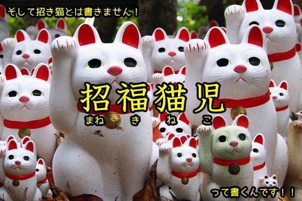 ニャポ旅27 世田谷 豪徳寺 招き猫 招福児猫