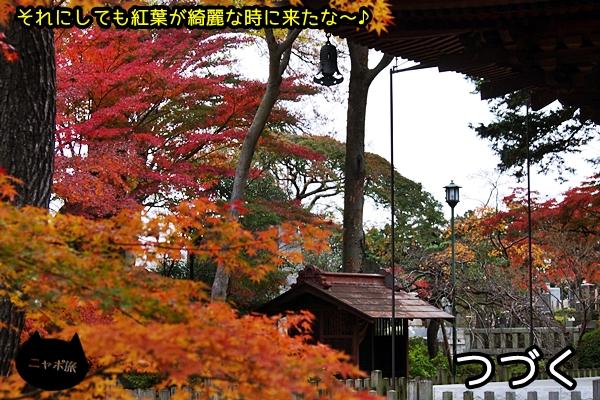 ニャポ旅27 豪徳寺