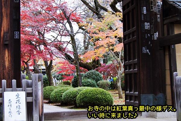 ニャポ旅27 世田谷 豪徳寺 招き猫