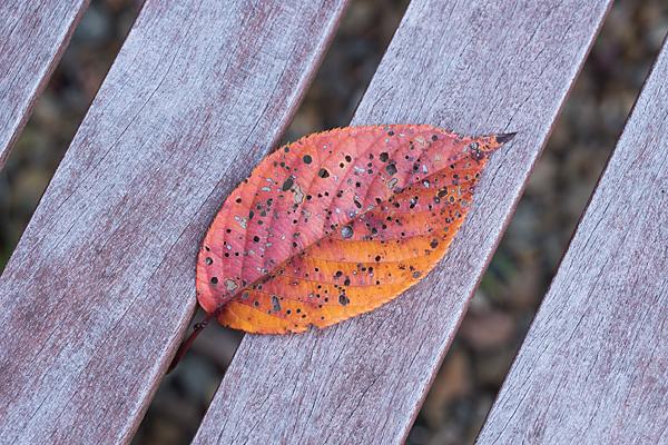 ベンチに落ち葉