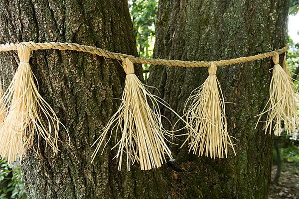 境内の木としめ縄
