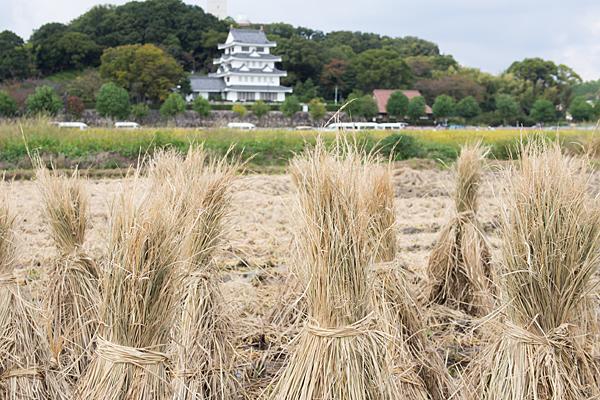 稲刈りと城山