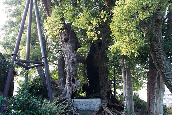 クスノキさん神社跡