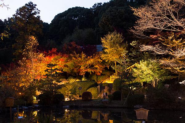 日本庭園の池周り