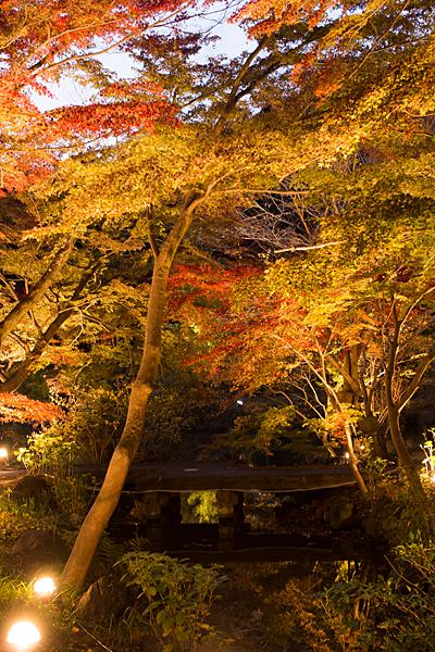 東山植物園紅葉