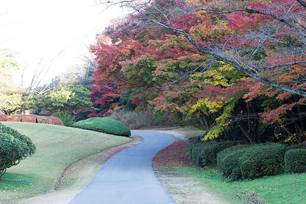 森林公園展示館前紅葉