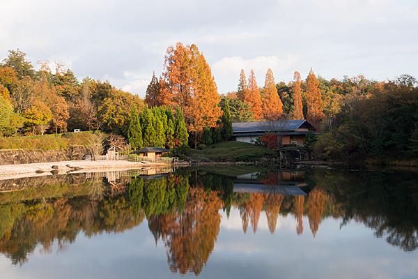 かきつばた池