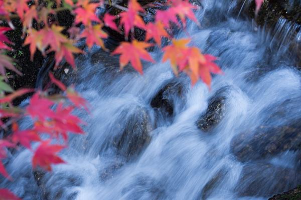 小川の流れと紅葉モミジ