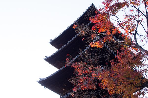 興正寺五重塔とモミジの紅葉