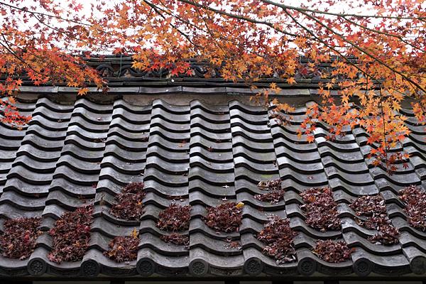屋根に降る落ち葉