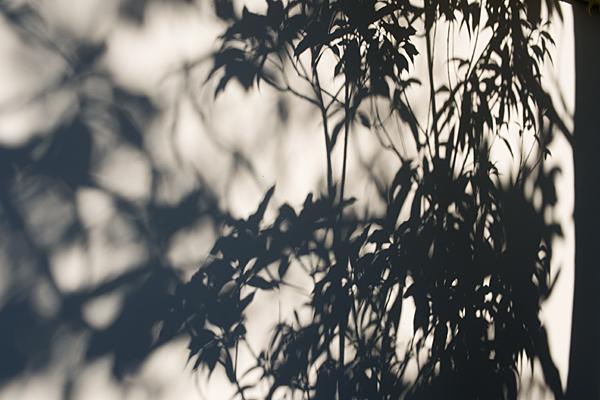 白壁に映る木々のシルエット