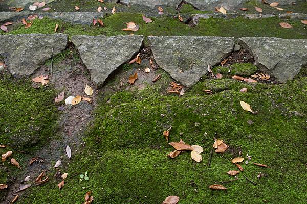 八幡神社石段と苔