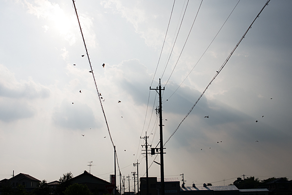 電線と空と鳥たち