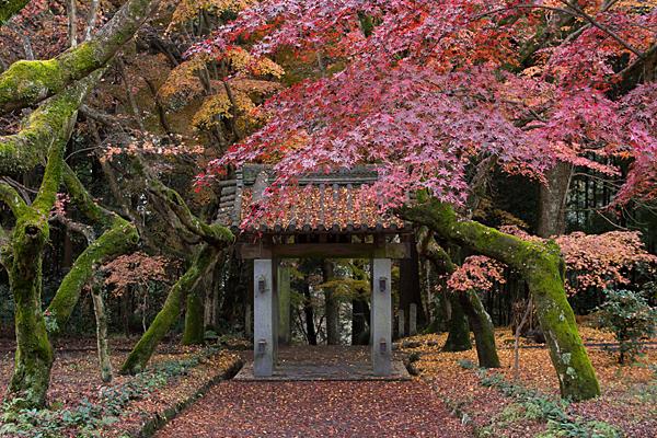 三蔵門と枯れモミジの風情